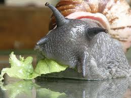 escargot mangeant une feuille